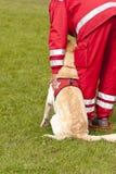 Esquadrão do cão do salvamento Fotos de Stock