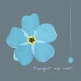Esquecer-mim flor azul Imagens de Stock