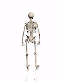 Esqueleto. stock de ilustración