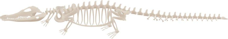Esqueleto 2 del cocodrilo Imagen de archivo libre de regalías