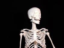 Esqueleto foto de stock royalty free