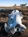 esqueleto Imagen de archivo libre de regalías
