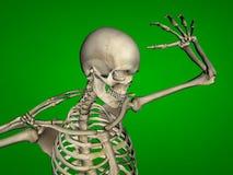 esqueleto Imagens de Stock