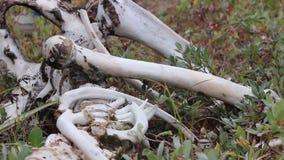Esqueleto animal metrajes
