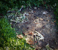 Esqueleto animal Fotos de archivo