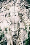 Esqueleto animal Imagenes de archivo