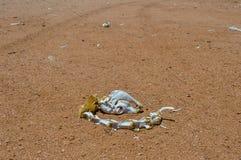 Esqueleto animal en el desierto de Sur Lipez, Bolivia Imagenes de archivo