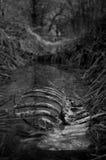 Esqueleto animal en una zanja por completo del agua Fotografía de archivo