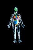 Esqueleto con los órganos coloridos Imagen de archivo