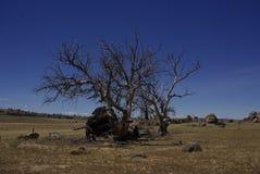 Esqueleto da árvore Imagens de Stock Royalty Free