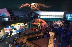Esqueleto da baleia Imagens de Stock Royalty Free