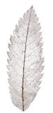 Esqueleto da folha de Rowan isolado no branco Fotografia de Stock
