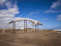 Esqueleto de la ballena Imagen de archivo libre de regalías