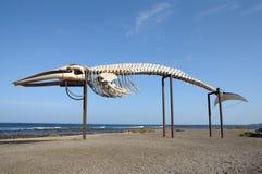 Esqueleto de la ballena en Fuerteventura España Foto de archivo