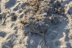 Esqueleto de la gaviota Imagen de archivo libre de regalías
