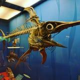 Esqueleto de los peces espadas Foto de archivo