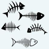 Esqueleto de los pescados Foto de archivo libre de regalías