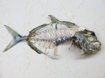 Esqueleto de los pescados Huesos de pescados tropicales foto de archivo