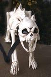 Esqueleto de rosnar o cão Fotos de Stock Royalty Free