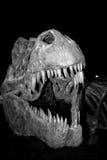 Esqueleto de T-Rex Fotografía de archivo libre de regalías