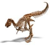 Esqueleto de T-Rex Fotos de archivo