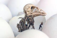 Esqueleto de um pássaro. Fotos de Stock