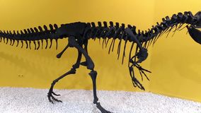Esqueleto de un dinosaurio prehistórico, cierre del Allosaurus para arriba metrajes