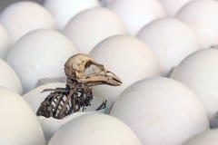 Esqueleto de un pájaro. Imagen de archivo libre de regalías