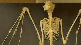 Esqueleto de un palo en laboratorio metrajes