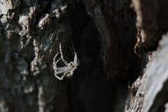 Esqueleto de una araña Foto de archivo