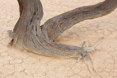 Esqueleto del árbol, Deadvlei, Namibia Imágenes de archivo libres de regalías