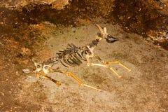 Esqueleto del animal en la cueva Foto de archivo