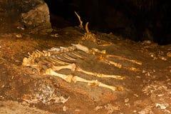 Esqueleto del animal en la cueva Imagenes de archivo