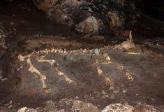 Esqueleto del animal grande que miente en la tierra en cueva Imagen de archivo