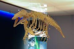 Esqueleto del animal prehistórico Fotos de archivo