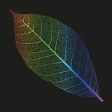 Esqueleto del arco iris del vector de la hoja Fotos de archivo libres de regalías