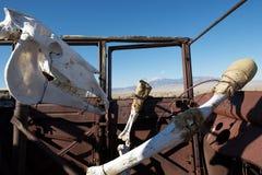 Esqueleto del caballo Fotos de archivo libres de regalías