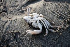Esqueleto del cangrejo Imagen de archivo libre de regalías