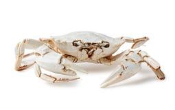 Esqueleto del cangrejo Imágenes de archivo libres de regalías