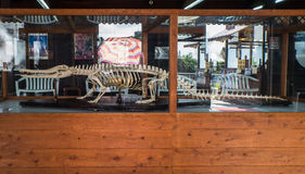 Esqueleto del cocodrilo en infierno de la montaña de Oniyama Jigoku o del monstruo Fotografía de archivo libre de regalías
