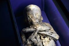 Esqueleto del cuerpo humano Foto de archivo