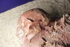 Esqueleto del cuerpo humano Imagen de archivo libre de regalías