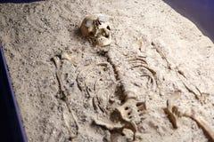 Esqueleto del cuerpo humano Fotografía de archivo