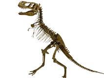 Esqueleto del dinosaurio Fotografía de archivo