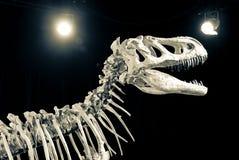 Esqueleto del dinosaurio Imagenes de archivo