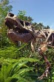 Esqueleto del dinosaurio de T Rex   Fotografía de archivo