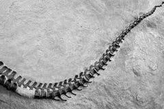 Esqueleto del dinosaurio en el monumento nacional del dinosaurio, Utah, los E.E.U.U. foto de archivo