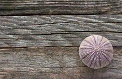 Esqueleto del erizo de mar Fotos de archivo