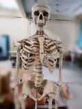 Esqueleto del laboratorio imagenes de archivo