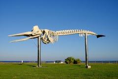 Esqueleto del mamífero en Fuerteventura, España 25 06 2016 Foto de archivo